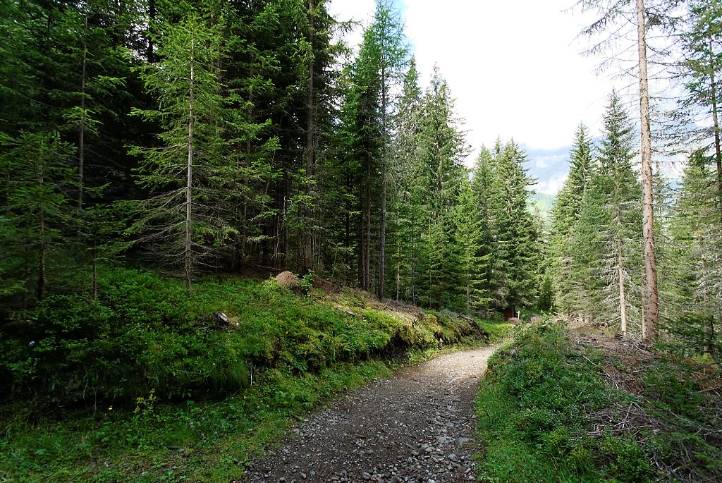 Tra boschi e ruscelli